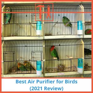 proHVACinfo | Best Air Purifier for Birds