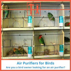proHVACinfo | Air Purifiers for Birds